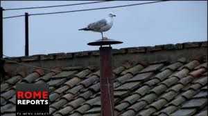 Seagull Conclave