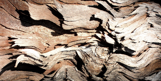 bark by Maneesha