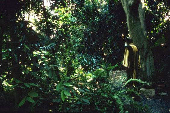 Osho in garden