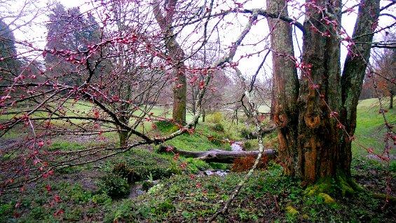 030 Dartington little stream