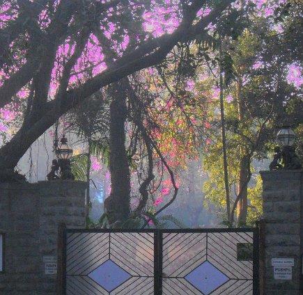 040 gate wirth foliage