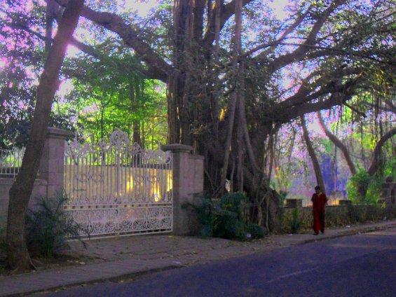 048 sannyasin by wrought iron gate