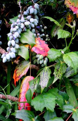 050-interesting-berries-&-leaves