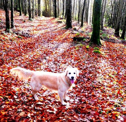 140 Sairsha in autumn woods