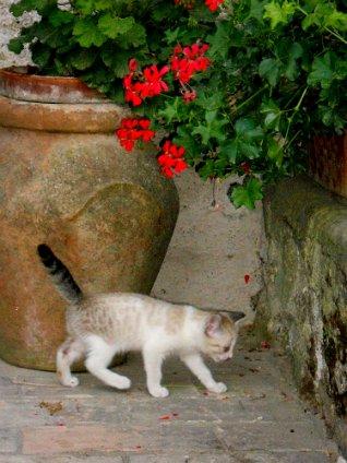 150 small cat walking