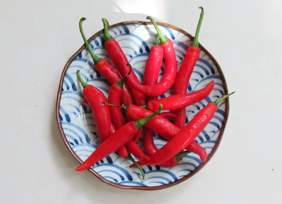 Hot Chilli on Plate