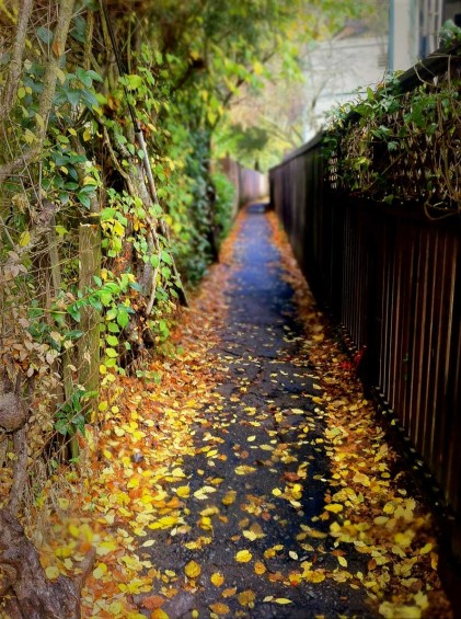 Golden leaves adorn a lane