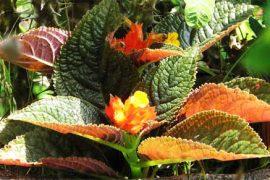 plant by Bhagawati