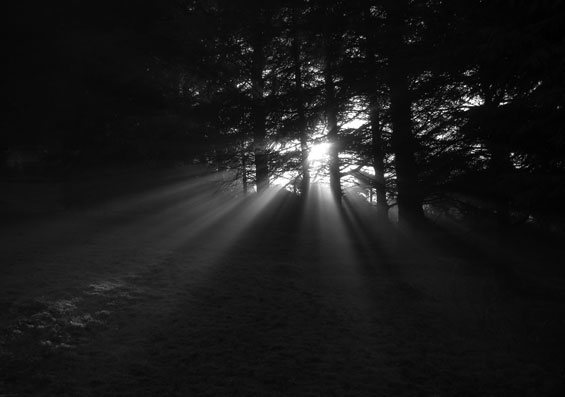 sunrays in wood by Atmo