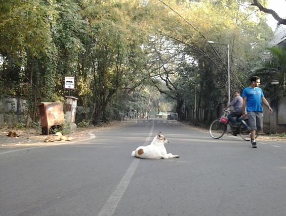 street dogs in Koregao Park