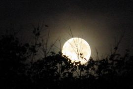 Full Moon Assam Times Feat.
