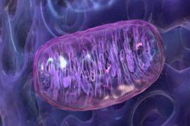 Microchondria