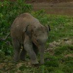 Elephants Feat.
