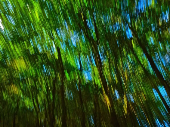 001 In Duch forest by Natyam aa