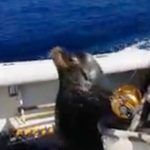 Sea Lion Feat.