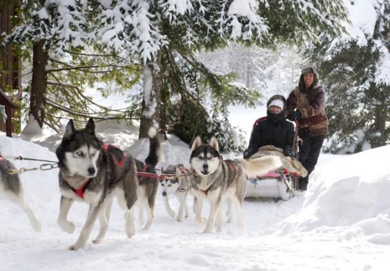 100-dog-sledding