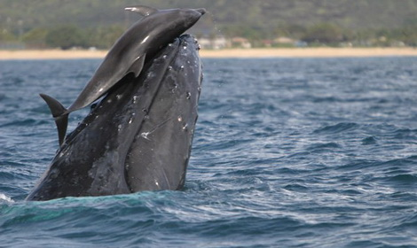 Dolphin and Whale Feat