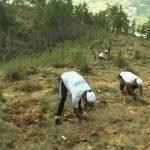 Bhutan tree planting Feat