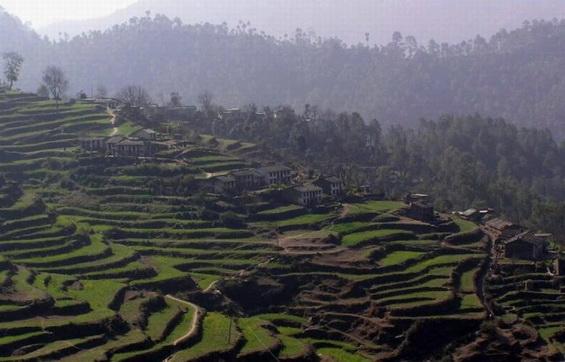 Himalayan Terrace Farms