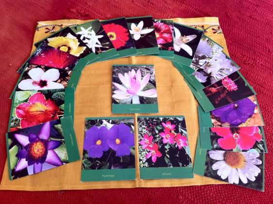Buddhafield-Flower-Cards