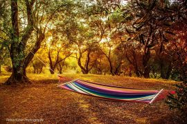 olive grove with hammock cr Petra Huber