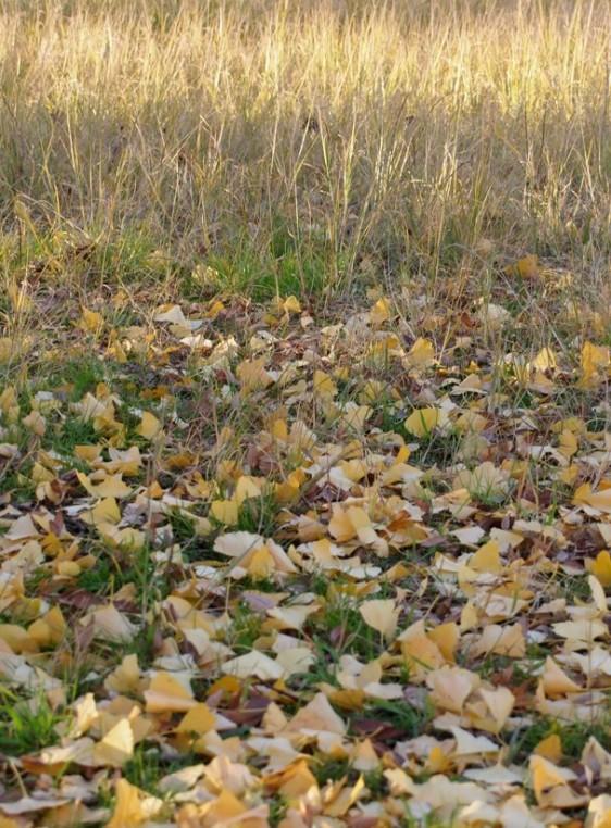 050 autumn 3