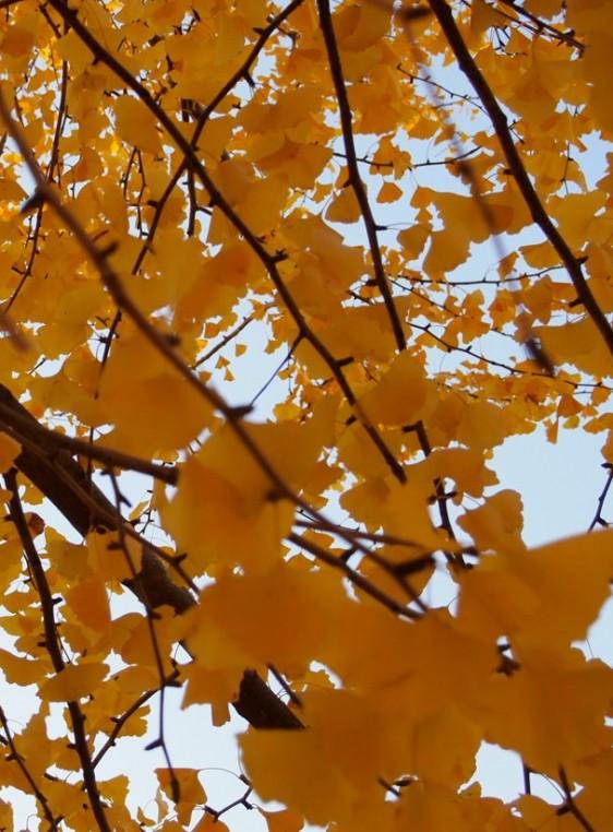 060 autumn 4