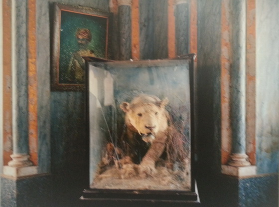 Janice Pariat 's taxidermied lioness