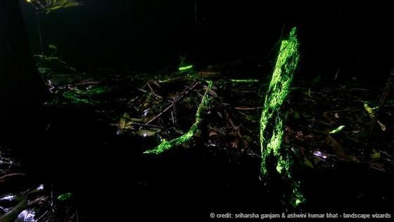 Jungle aglow