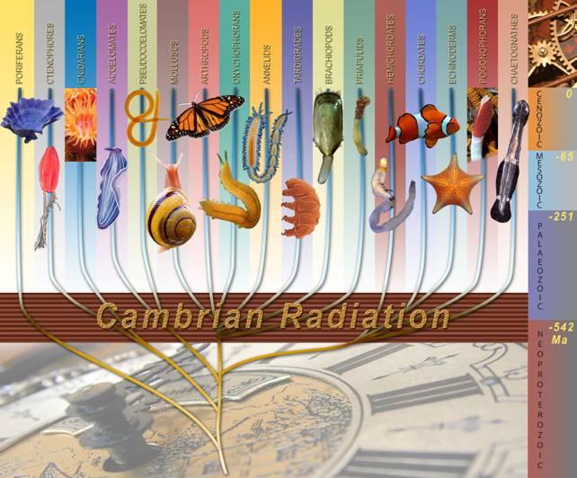 Cambrian radiation