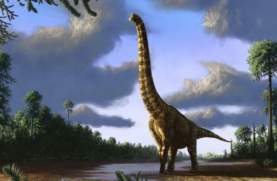 Brachiosaurus s