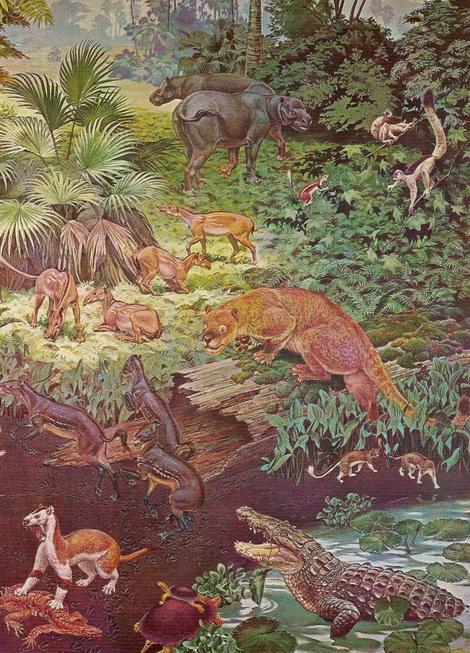 Eocene fauna