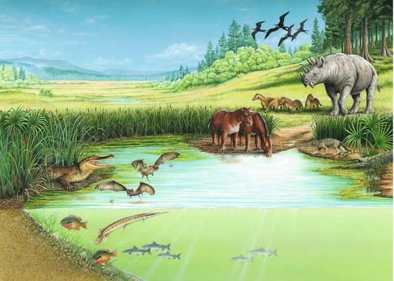 Eocene