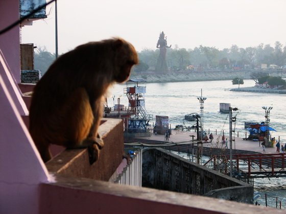 22 Haridwar Monkey and Shiva Satue