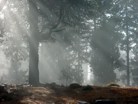 Forest near Almora