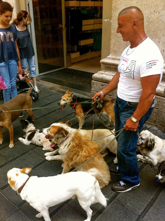Dogs: Via Toledo, Naples, Italy - This man walking 8 dogs stopped to chat with a group of women. It seemed such a fitting statement for Naples, which is all about statements and connection.