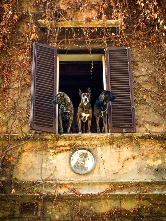 More Dogs: Via Urbana, Rome, Italy - I looked up and saw these three watching all of us below. They begged for a photo.