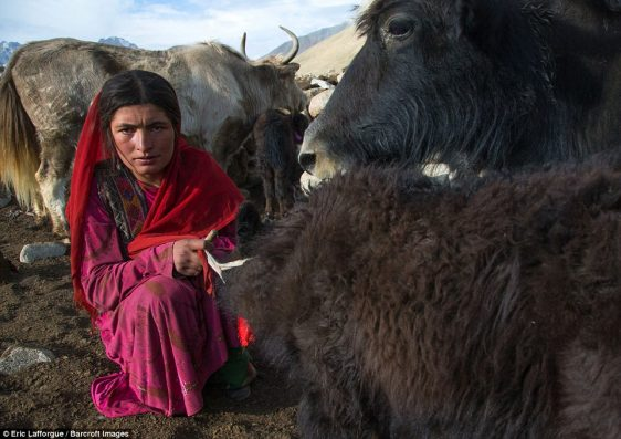 A Wakhi nomad woman with her yak in Afghanistan