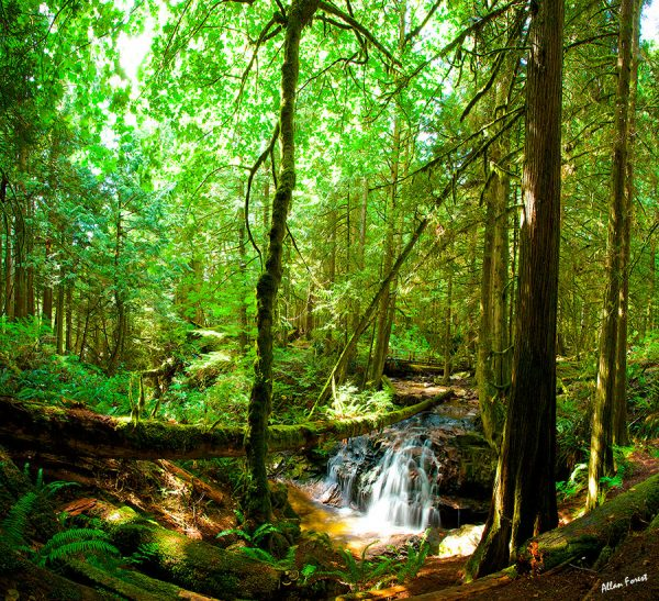 000-bc-rainforest-allanforest-2