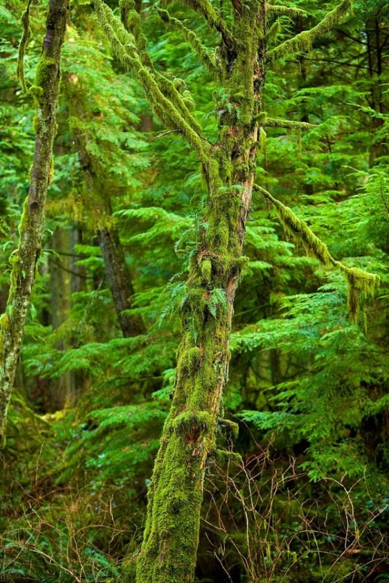 005-bc-rainforest-allanforest-18