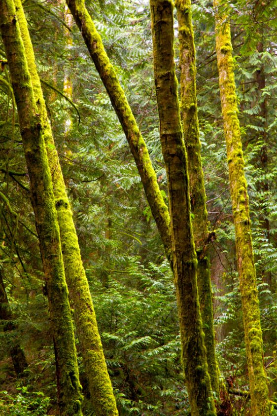 043-bc-rainforest-allanforest-3
