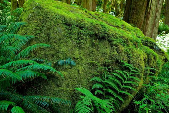 045-bc-rainforest-allanforest-20