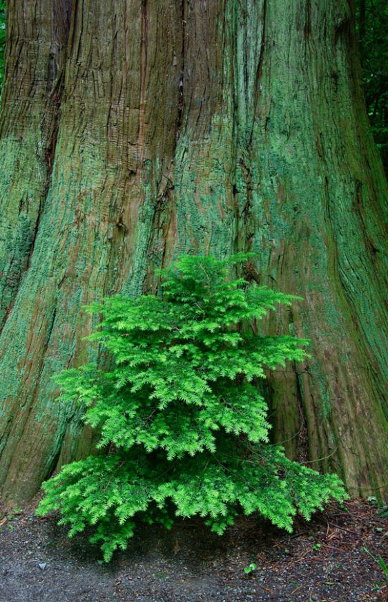 050-bc-rainforest-allanforest-23