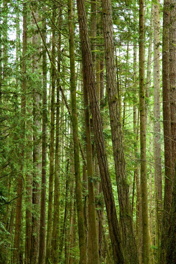 080-bc-rainforest-allanforest-16