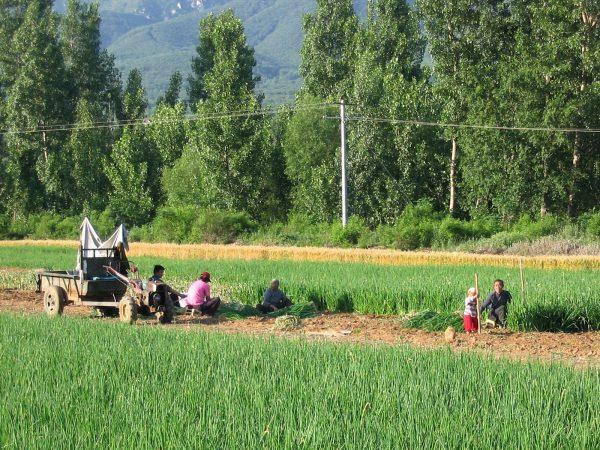 Farmers in nearby fields