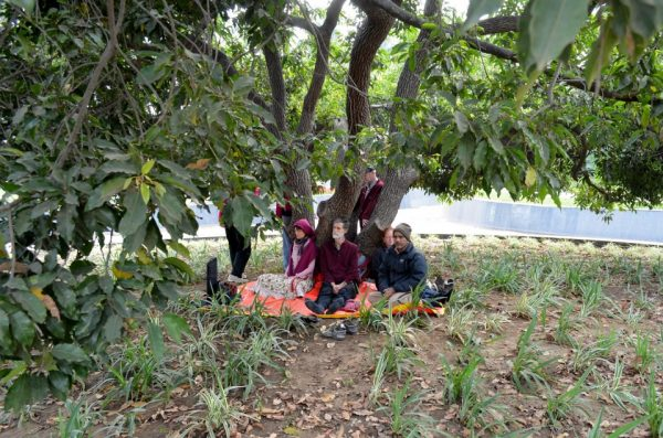 Jabalpur, the tree where Osho became enlightened