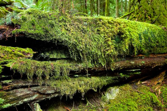 bc-rainforest-allanforest-8