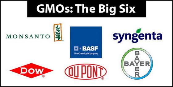 GMO Big Six