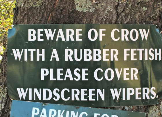 beware-of-crow