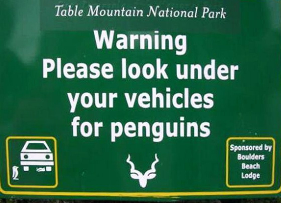 penguins-under-car